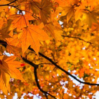 行楽の秋はタビジョになろう♪ LOVEggg2ndがこの秋行きたい推しスポット大紹介!
